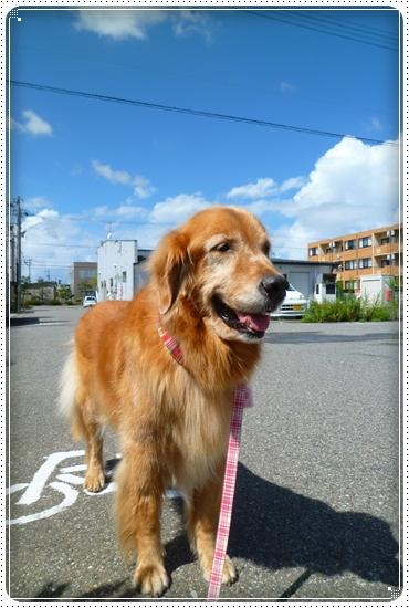 2010,9,14お散歩5