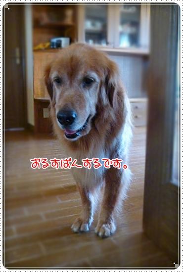 2010,9,14お散歩2