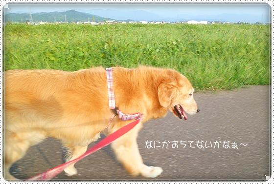 2010,9,21お散歩12