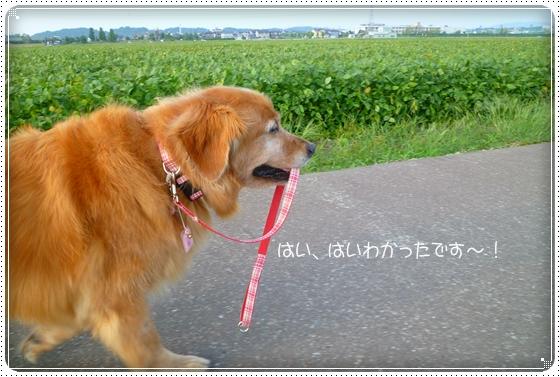 2010,9,21お散歩11