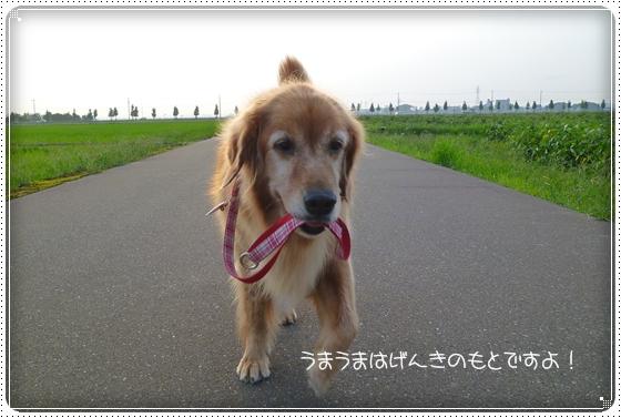 2010,9,21お散歩10