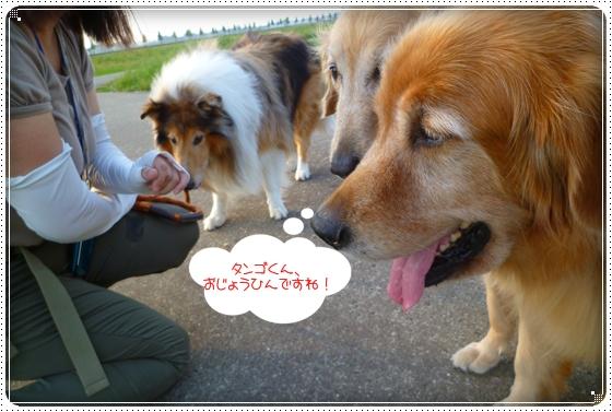 2010,9,21お散歩9