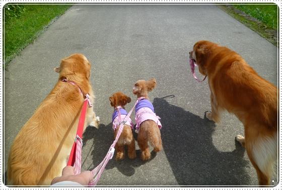 2010,9,24お散歩6