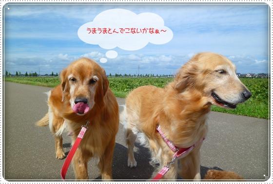 2010,9,24お散歩5