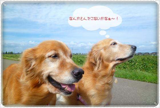 2010,9,24お散歩4