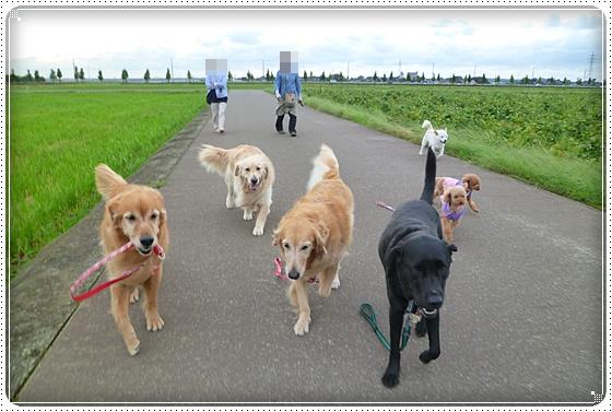 2010,9,24お散歩9
