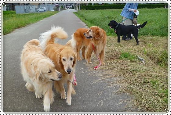 2010,9,24お散歩8