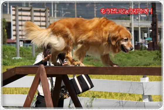 2010,9,27琵琶湖12