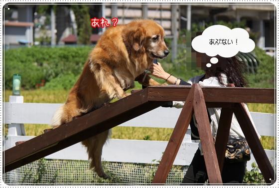 2010,9,27琵琶湖10