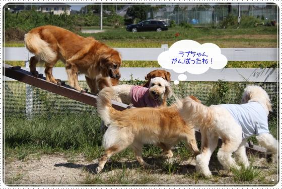 2010,9,27琵琶湖15