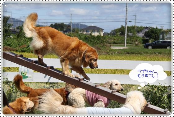 2010,9,27琵琶湖14