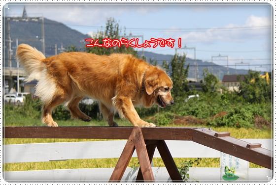2010,9,27琵琶湖13