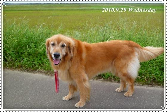 2010,9,30お散歩6