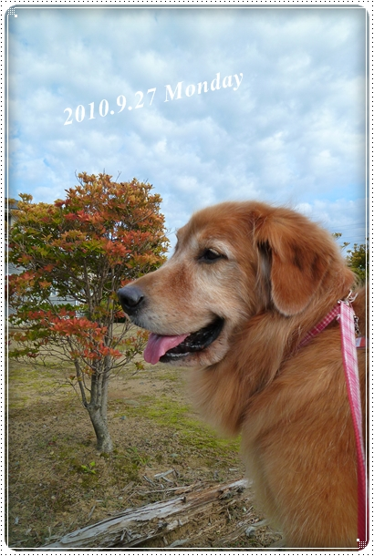 2010,9,30お散歩3