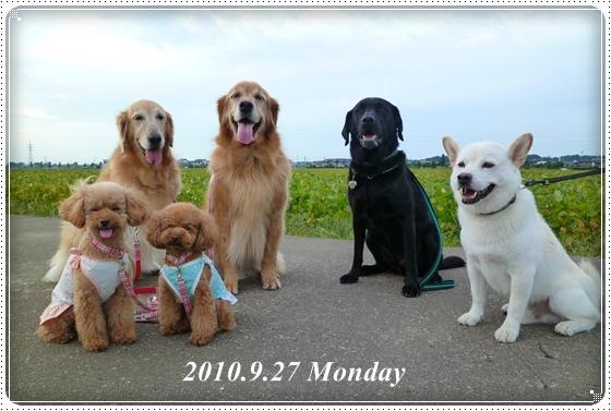 2010,9,30お散歩1