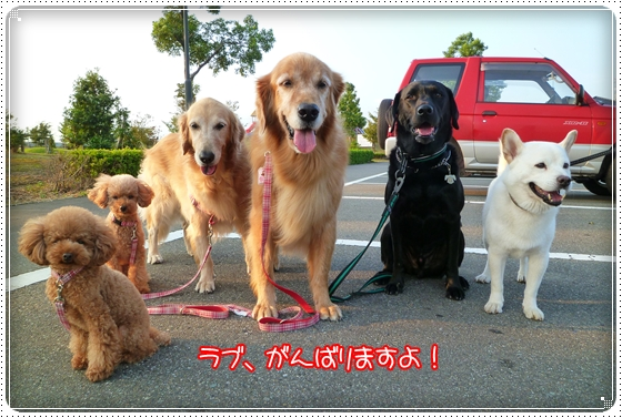2010,10,4お散歩12