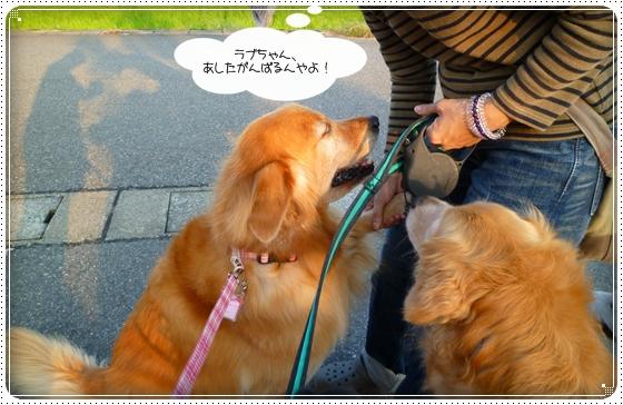 2010,10,4お散歩10
