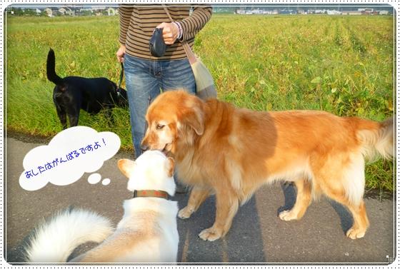 2010,10,4お散歩9