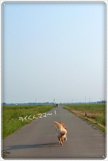 2010,10,4お散歩8