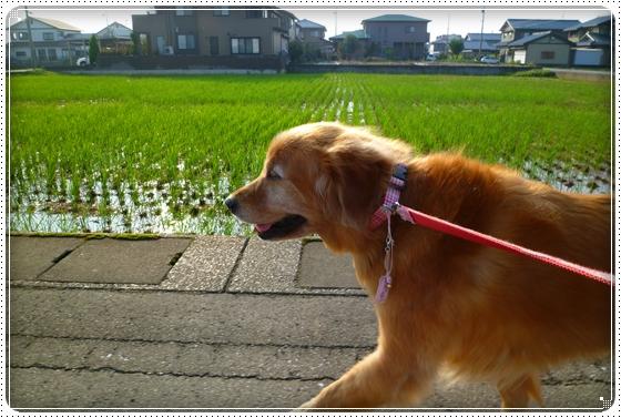 2010,10,4お散歩7