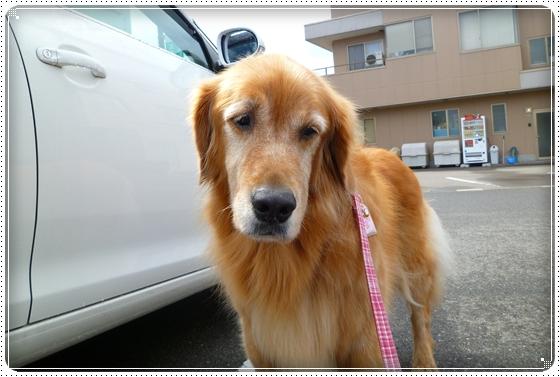 2010,10,5お散歩5
