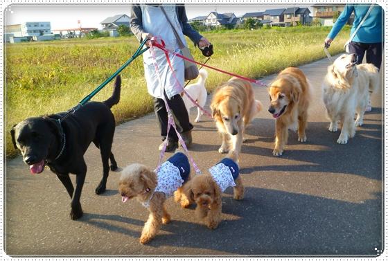 2010,10,7お散歩12