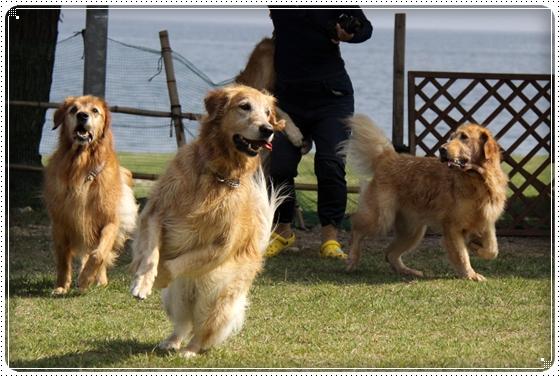 2010,10,15琵琶湖6