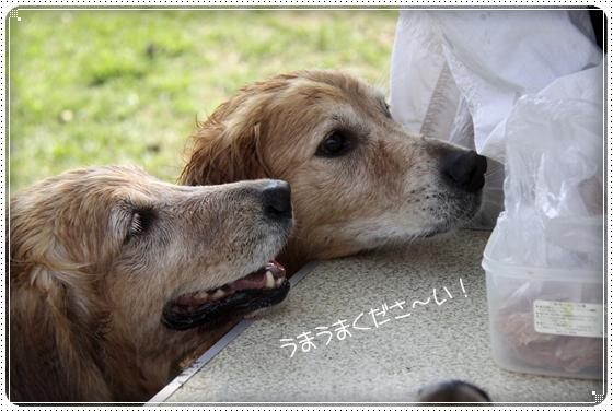 2010,10,15琵琶湖1