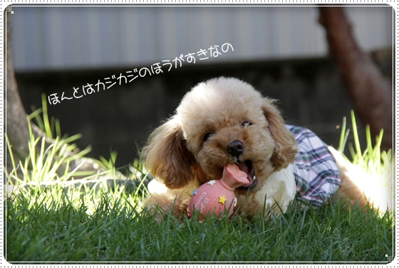 2010,10,17お庭遊び5