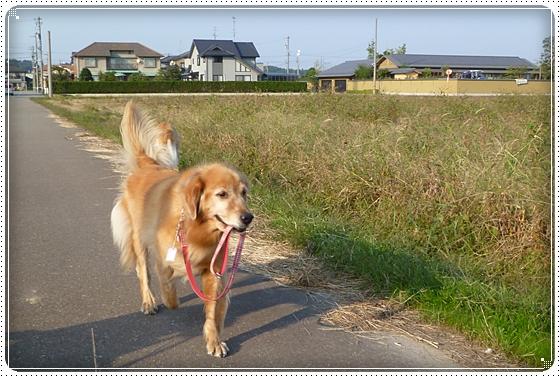 2010,10,18お散歩7