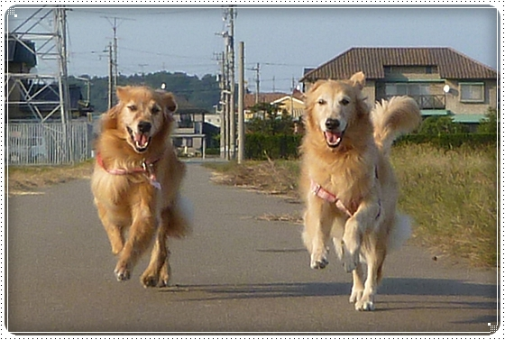 2010,10,18お散歩6