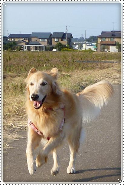 2010,10,18お散歩8
