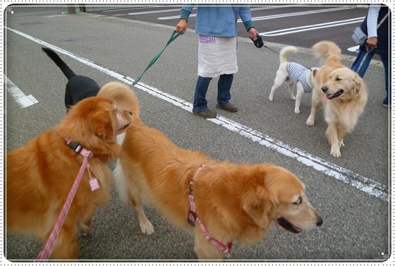 2010,10,20お散歩7