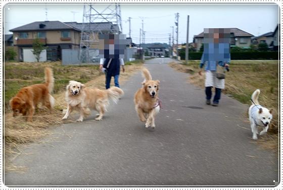 2010,10,20お散歩9
