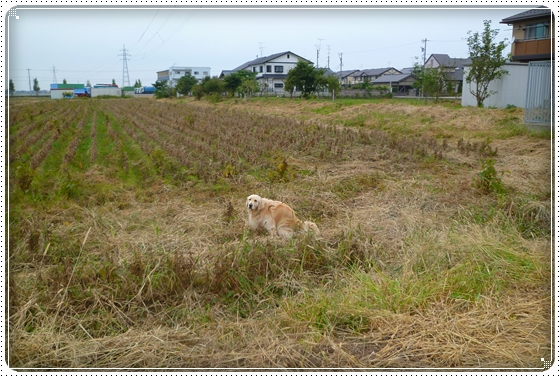 2010,10,20お散歩8