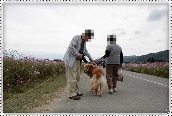 2010,10,23コスモス4