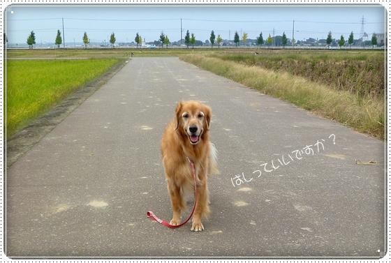2010,10,24お散歩5
