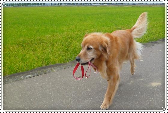 2010,10,24お散歩8