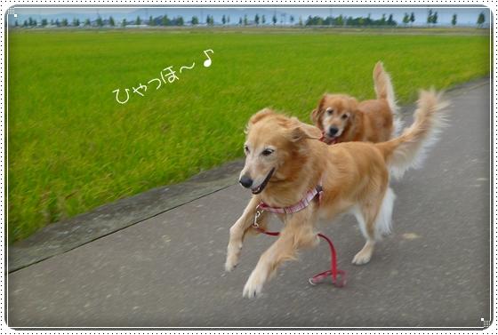 2010,10,24お散歩7
