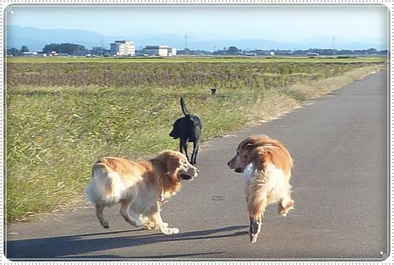 2010,10,27お散歩7