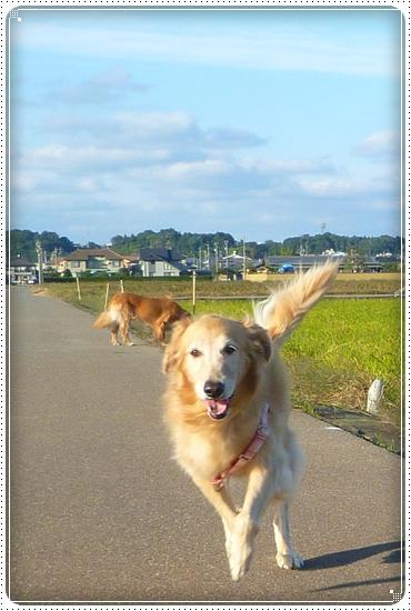 2010,10,27お散歩11