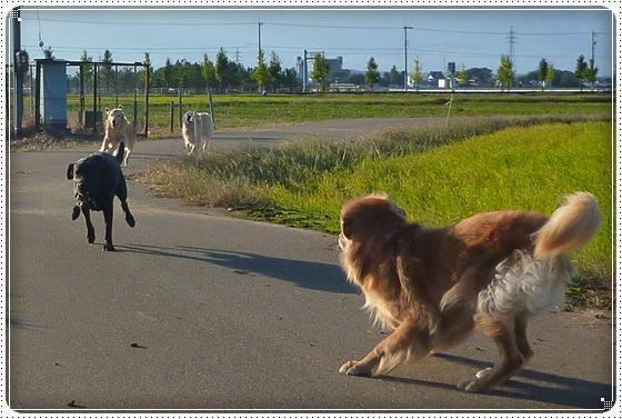 2010,10,27お散歩12
