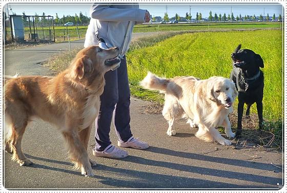 2010,10,27お散歩14