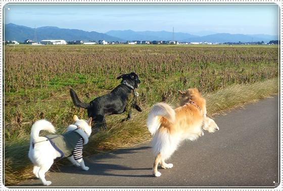 2010,10,27お散歩10