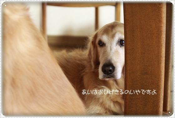 2010,11,10お散歩6