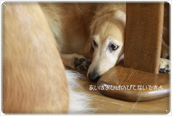 2010,11,10お散歩5