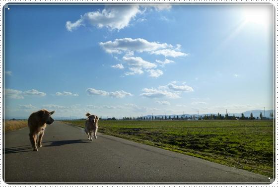 2010,11,11お散歩4