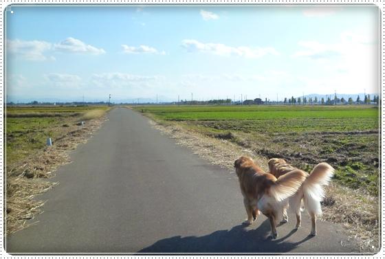 2010,11,11お散歩6