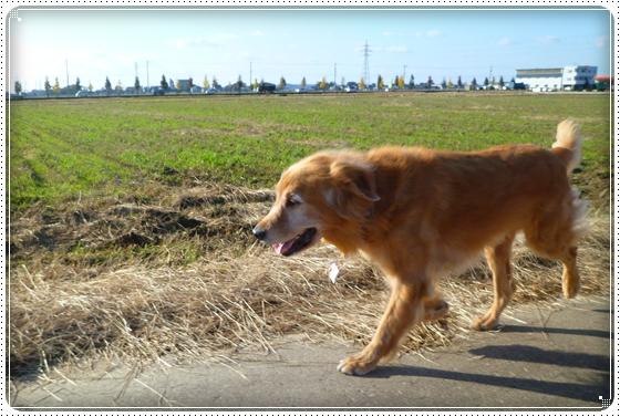 2010,11,11お散歩3