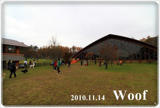 2010,11,18ワフ1